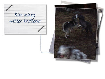hundklubben2_kiro.jpg