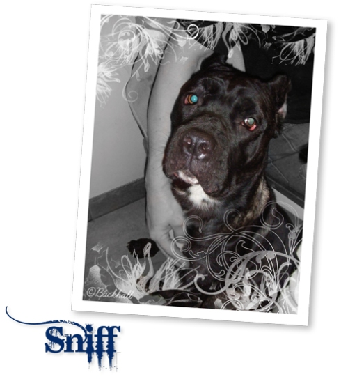 sniff.jpg